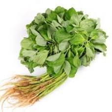 BAYAM HIJAU / GREEN SPINACH / 绿菠菜